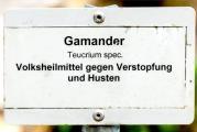 Gamander IMG_6562.jpg