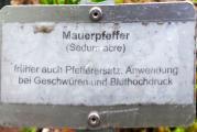 Mauerpfeffer.jpg
