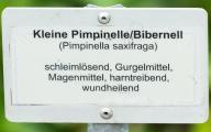 Pimpinelle IMG_6564.jpg