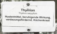 Thymian IMG_6563.jpg