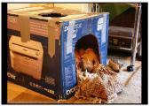 hund in Kiste.jpg
