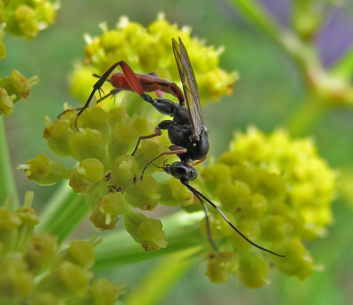insekten namen bestimmen kleine fliegen. Black Bedroom Furniture Sets. Home Design Ideas