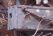 Holzkasten für Hummeln.jpg