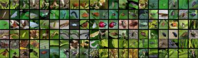 Insektenlogo.jpg