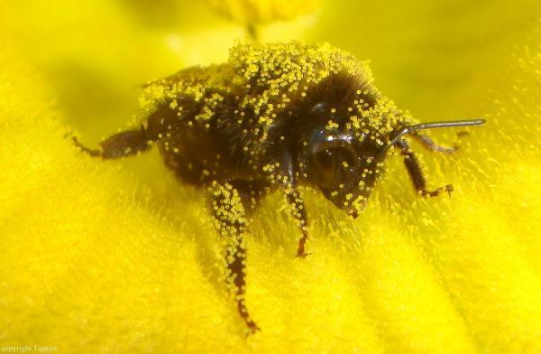 comp_mit Pollen übersät 2.jpg
