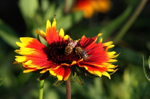 Korkade Bienen.jpg