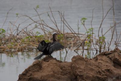 Lake  Kariba Bird.jpg