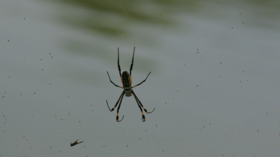 Spinne 2.jpg