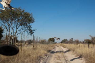 Botswana 2011-0250.jpg