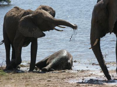 k-Elephant-C÷©÷MR÷123.JPG