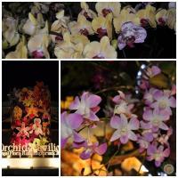 Royal Flora Ausstellung in Chiang Mai 2012. (1)