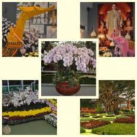 Royal Flora Ausstellung in Chiang Mai 2012. (3)