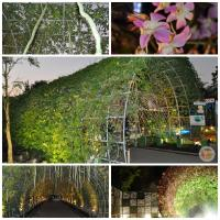 Royal Flora Ausstellung in Chiang Mai 2012. (6)
