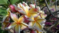 Blüten orange