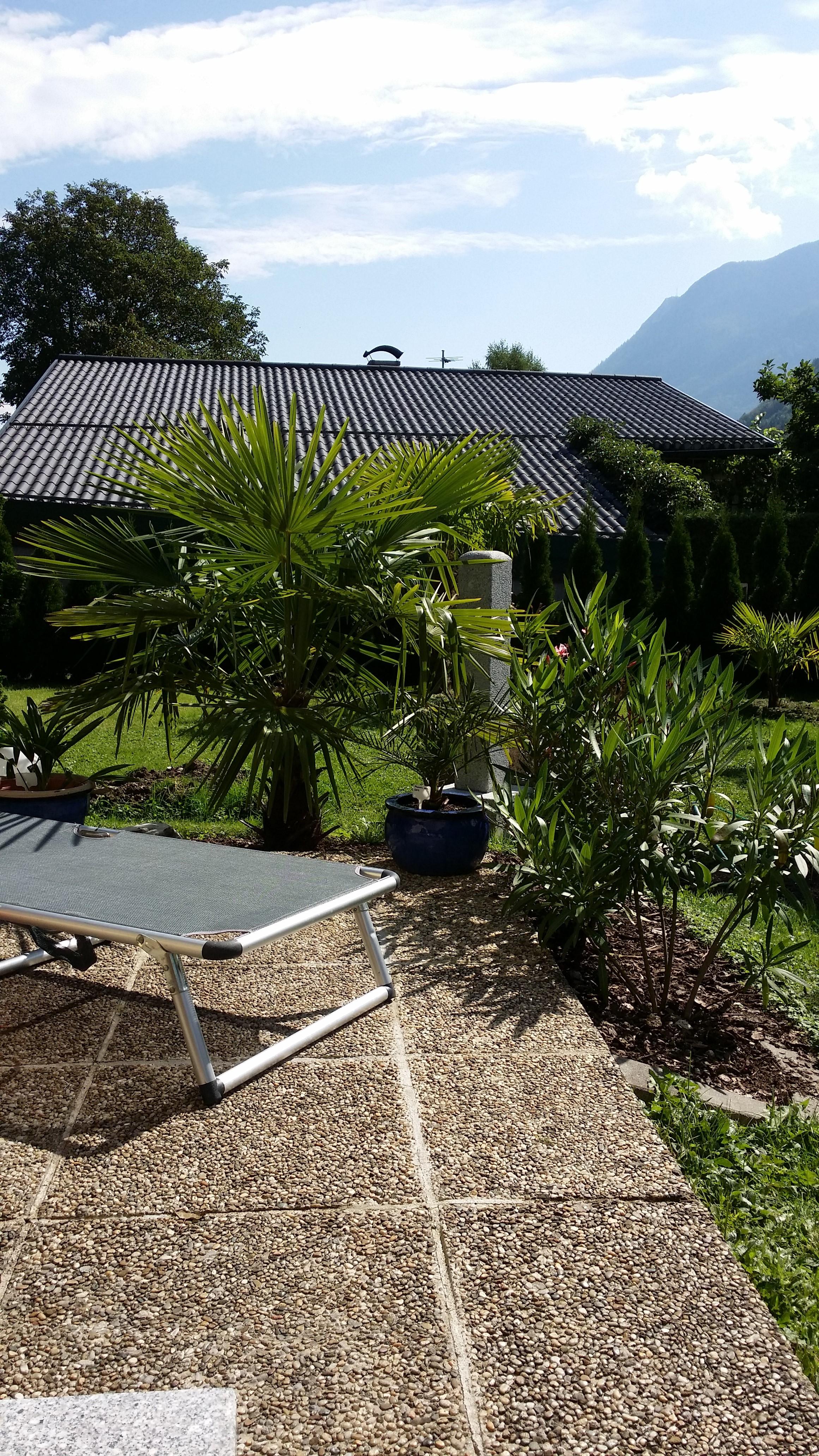 re trachycarpus fortunei stellt wachstum bei zu hohen temperaturen ein 4. Black Bedroom Furniture Sets. Home Design Ideas