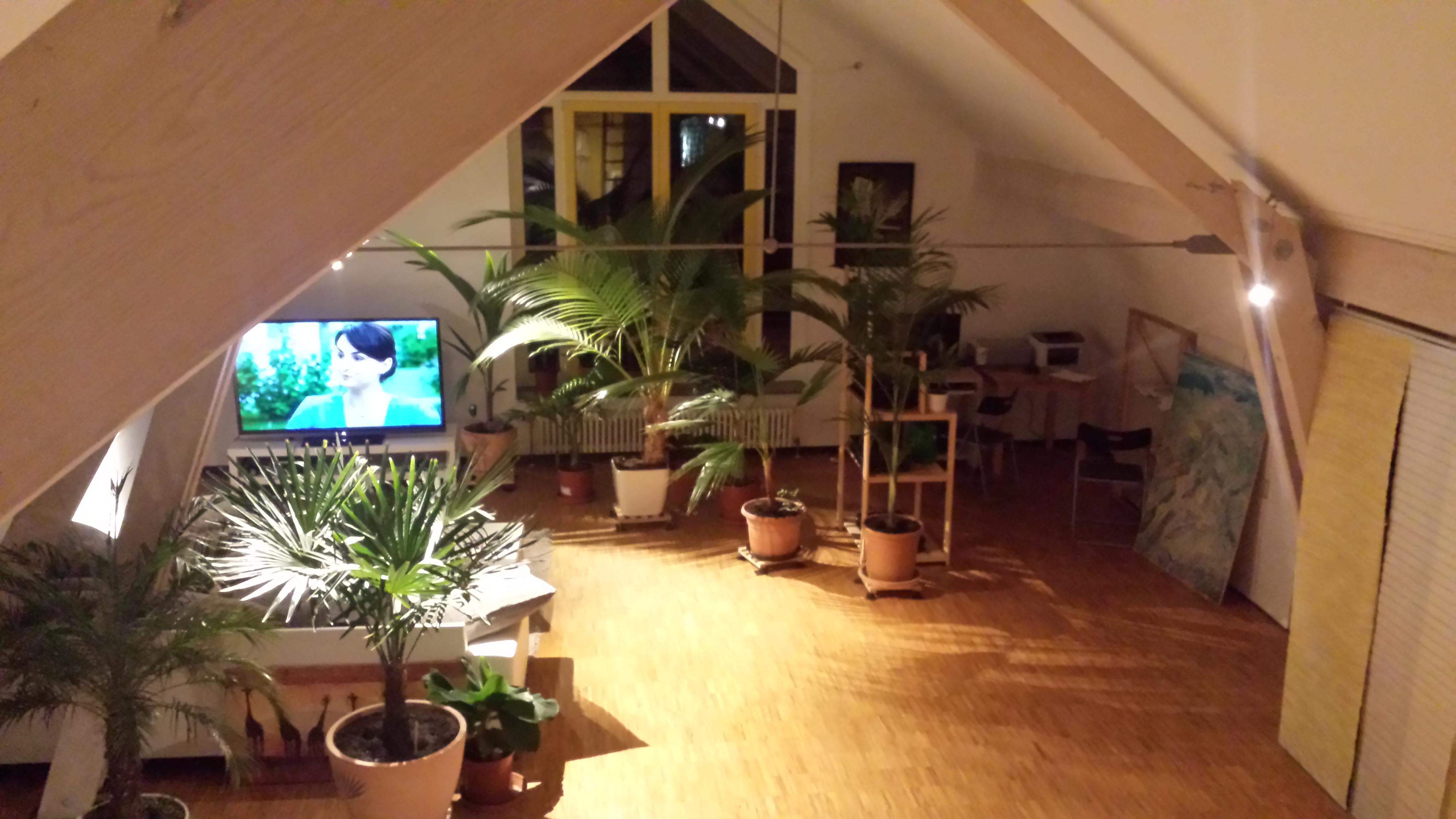 Palmen und co coco nucifera dwarf keimling for Wohnzimmer 22 grad