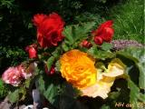 Blumen Septemberkinder.JPG