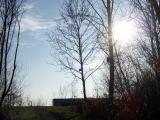 Germersheimer Altwasser bei herrlichem Sonnenschein 29.11.2008 003.jpg