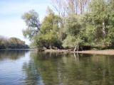 Altrhein GER bei mini Wasserstand.jpg