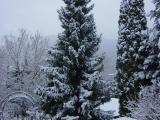 Schnee und Rosen 002.jpg