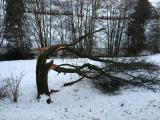 Baum geknickt.JPG