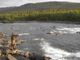 Lappland, flyfishing.JPG