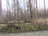 Germersheimer Altwasser bei herrlichem Sonnenschein 29.11.2008 026.jpg