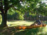 Kanutour Spree 09-4.jpg