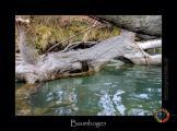 baumbogen-IT.jpg