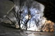 spiegelbaum-IT.jpg