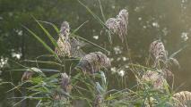 P1000141_bearbeitet-1.jpg