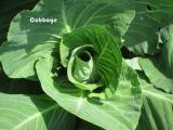 Veggy Garden May 21st 007-1.jpg