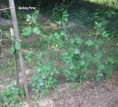 Veggy Garden May 21st 011-1.jpg