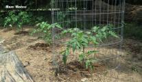 Veggy Garden May 21st 013-1.jpg