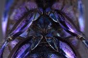 82 blue fertigkl.jpg