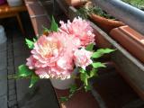 Pfingstrose Mai 2012 002.jpg