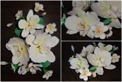 Col Orchideen.jpg