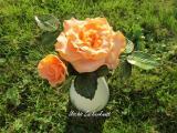Rose aprikot im Gras gepudert.jpg