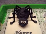 Spider_4.jpg