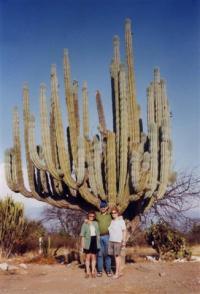 Mexiko2000 (29)