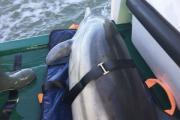2016-02-19-Seenotretter-fuer-Delfin-im-Einsatz.jpg