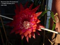 Kiwi Remembrance