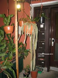 Der Hauseingang - Mit Coldemonensis > Affenschwanz