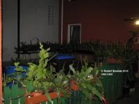 Der Epihof bei Nacht