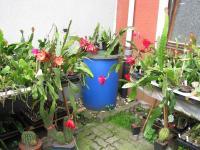 Einige Blüten auf einmal -