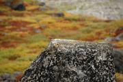steinschmaetzer.jpg