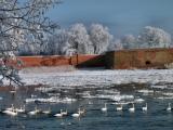 An der Oder bei Küstrin-Kietz 069 (FILEminimizer).jpg