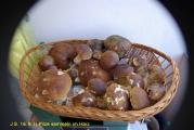 16.9.11 Pilze sammeln im Harz (10).JPG