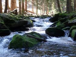 Bild_Natur_2.jpg