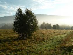 Bild_Natur_6.jpg